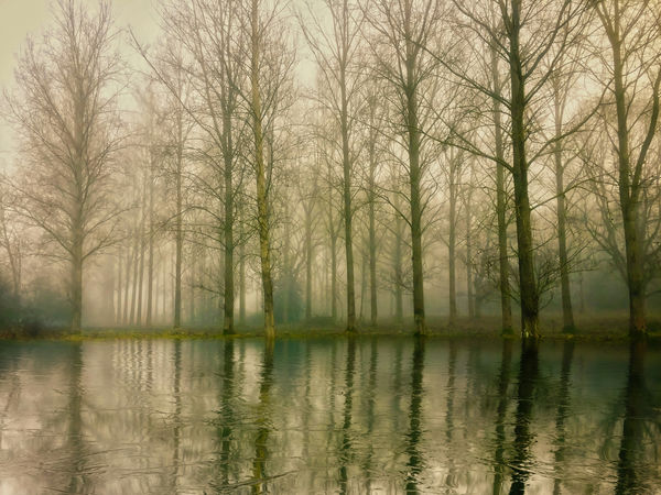 Frosty winter morning Water Reflection Tree Tranquility Scenics - Nature Lake Beauty In Nature Nature No People Plant Forest Tranquil Scene Fog Land Bare Tree WoodLand Day Outdoors Textured Effect Swamp