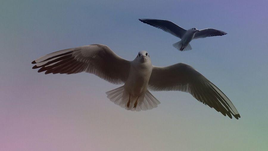 Zwei auf Patrouille Steinhude-am-meer.de - Dein Meer-Foto Animals