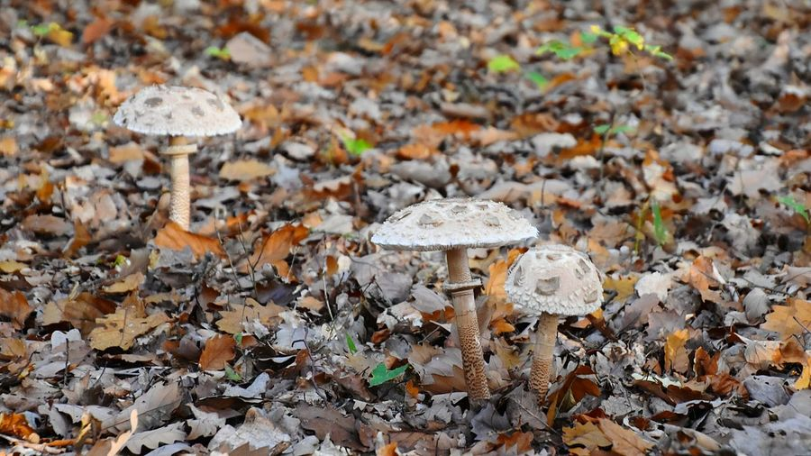 Close-Up Of Mushrooms On Field