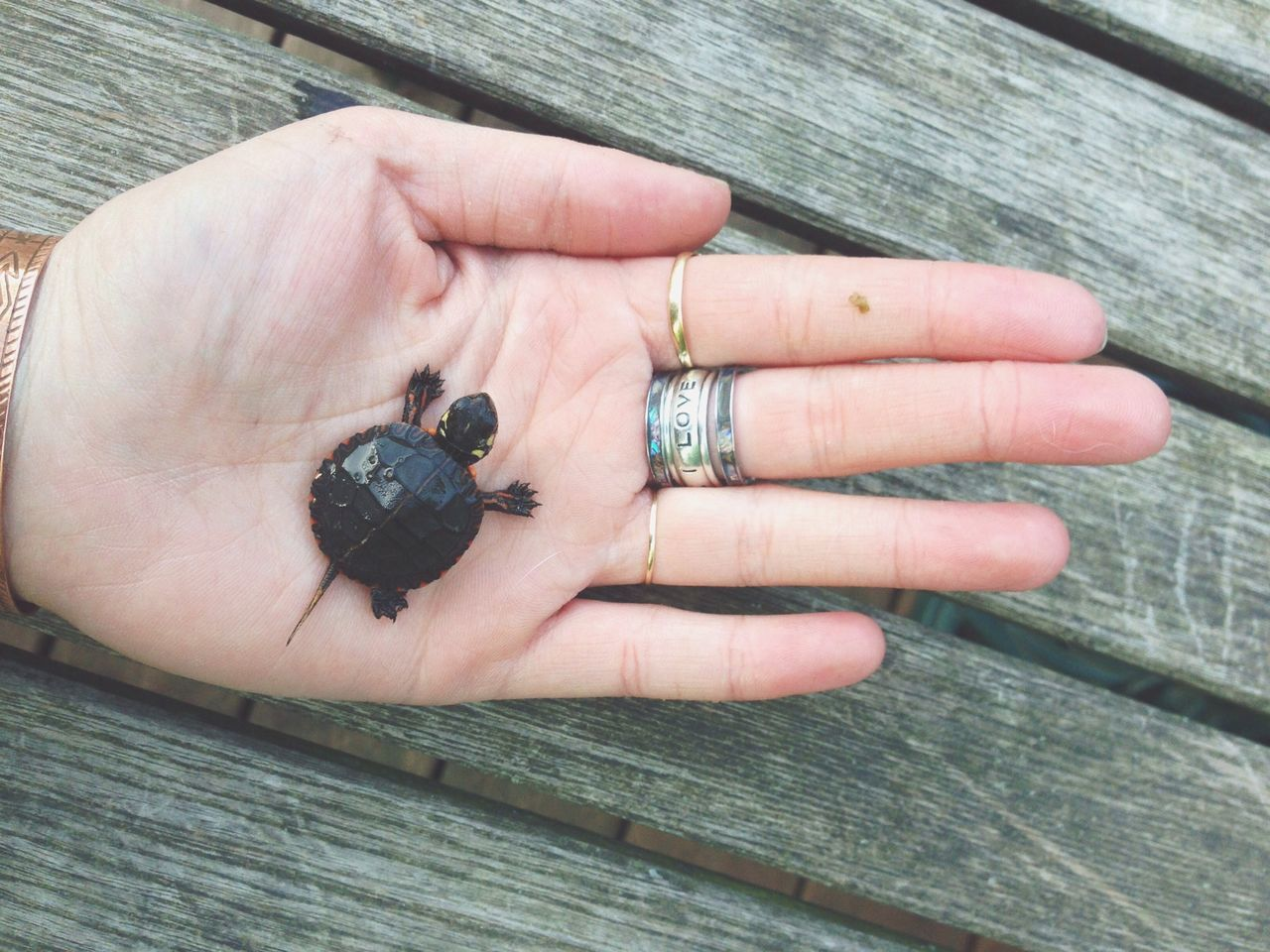 Close-up of a hand holding a turtle