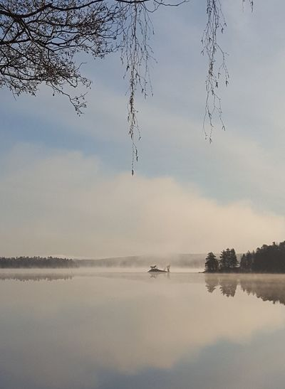 Fogymorning Foggy Weather Fog_collection Lake View Small Island Reflections In The Water Reflection Tree And Sky Tree Beauty In Nature Tranquil Scene Growth Outdoors Fragility Växjö  Sweden