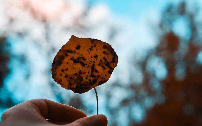 Leaf Human Hand