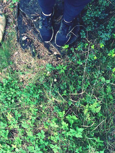 Forestwalk Дождь мокрые ноги Лес прогулка