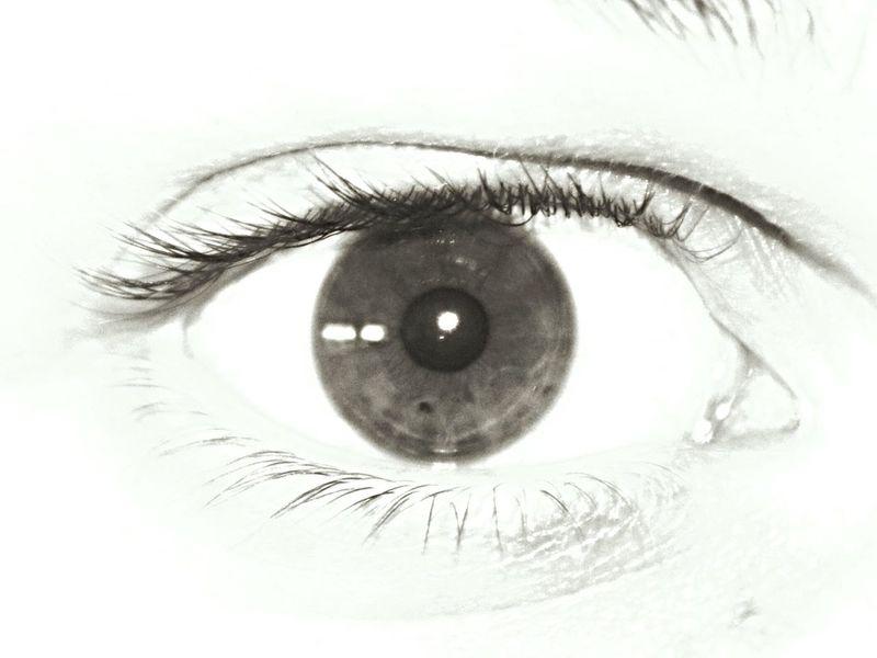 Eye Human Eye Eye Eyelash Human Body Part Eyesight Body Part One Person Sensory Perception Close-up Eyeball Iris - Eye Extreme Close-up Looking At Camera Macro