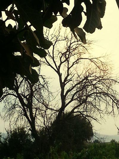 Yaz ortasında yaprakları dökülürse bir ağacın, hayat suyu bitmistir. Hayatınısula Unutma Summer2015 Hope Mutluol Umudunukaybetme
