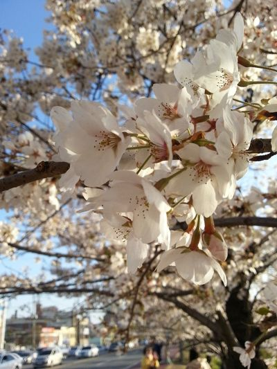 Flower Flowers Bloom Blossom