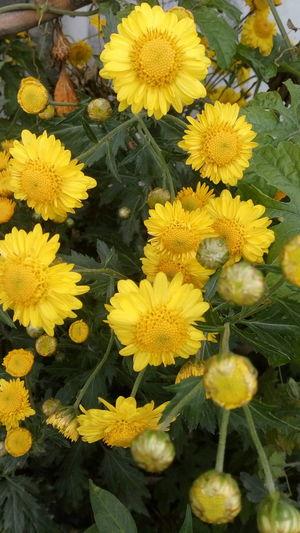 Nature_flowers