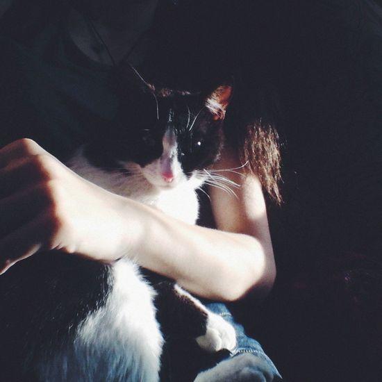 Cat♡ Mysweetbaby Fil