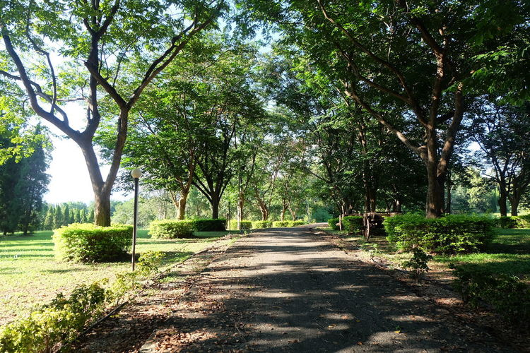 Tree Plant Direction The Way Forward Nature Sunlight Growth Tranquility Day Beauty In Nature Diminishing Perspective Shadow No People Road Green Color Land Footpath Grass Park Tranquil Scene Outdoors Treelined Long