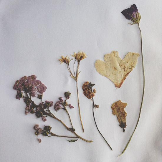 Flowers dried flowers First Eyeem Photo