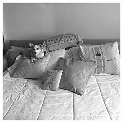 My bed. Home Is Where The Art Is Dogs Of EyeEm Dog Dogs