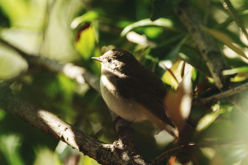 in a green Bird