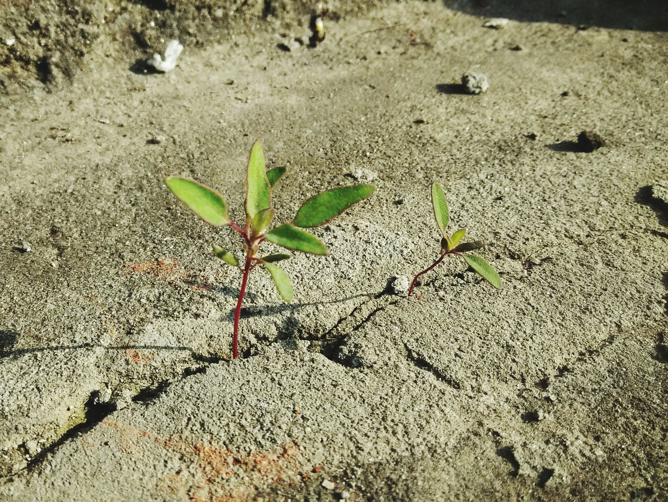 growth, leaf, plant, nature, high angle view, growing, freshness, beauty in nature, close-up, fragility, day, flower, field, outdoors, no people, tranquility, green color, sunlight, ground, beginnings