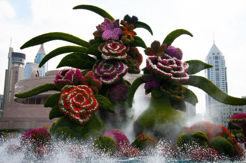 Close-up of purple flowering plant against building