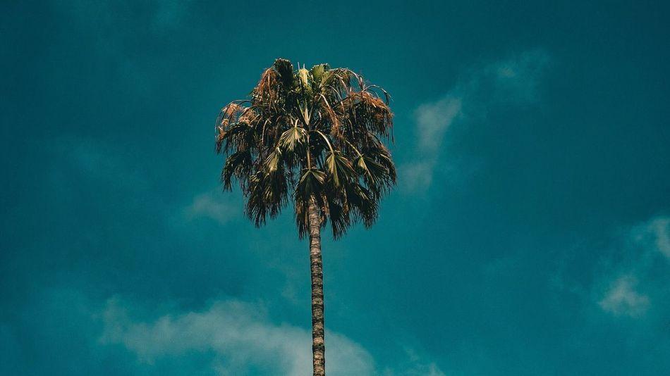 Low Angle View Sky Day Outdoors No People Nature Fujifilm_xseries Fuji Street Tree Fujilove Green Color Urban Skyline Light Tower Clear Sky Cloud - Sky Palm Palm Tree Palm Trees