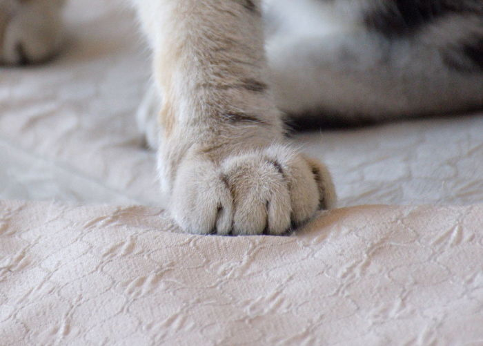 Close-Up Of Cat Paw On Bed