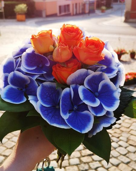 Beautiful Flowers 🌸 Beuatiful Nature Beauty In Nature #sunnyday #sunshine #beautiful #Blue #red #redflowers #blueflowers #blueandwhite #redRose Flower Head Flower City Water Bouquet Petal Scented Hydrangea Close-up Plant Flower Market Flower Shop Flower Arrangement Bunch Of Flowers Rose - Flower Florist