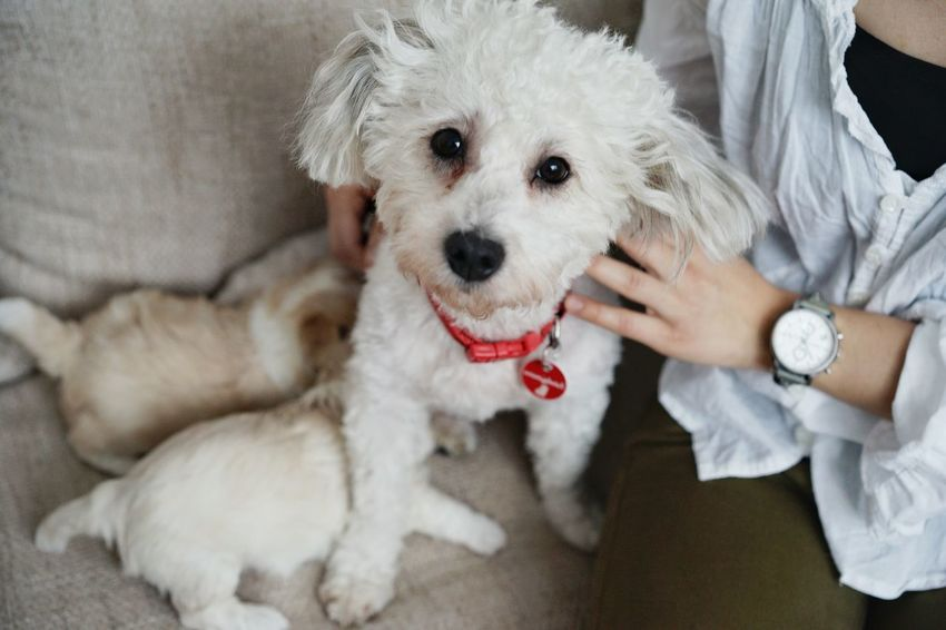 Puppy Puppies Human Hand Pets Portrait Dog Close-up Puppy Pet Collar Pet Leash Pampered Pets This Is Family