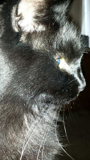 Master Grimly I Love My Cat Pets He is the best! Black cats are good luck ;) Love him ♡♡♡