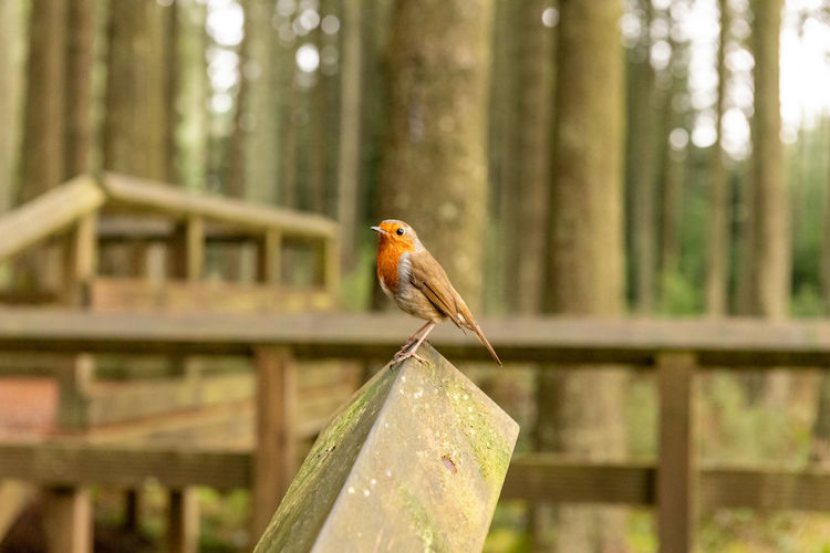 Close-up of bird perching on metal in forest
