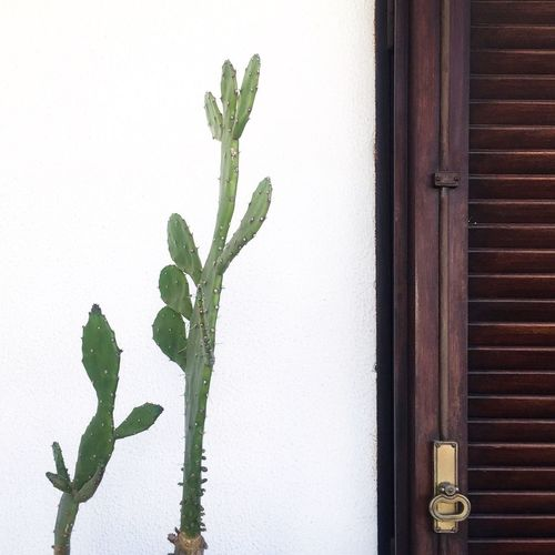 Plant Wall - Building Feature Green Color No People Day Growth Nature Glass - Material Close-up Outdoors Architecture Window Leaf Wall Plant Part Built Structure Cactus Building