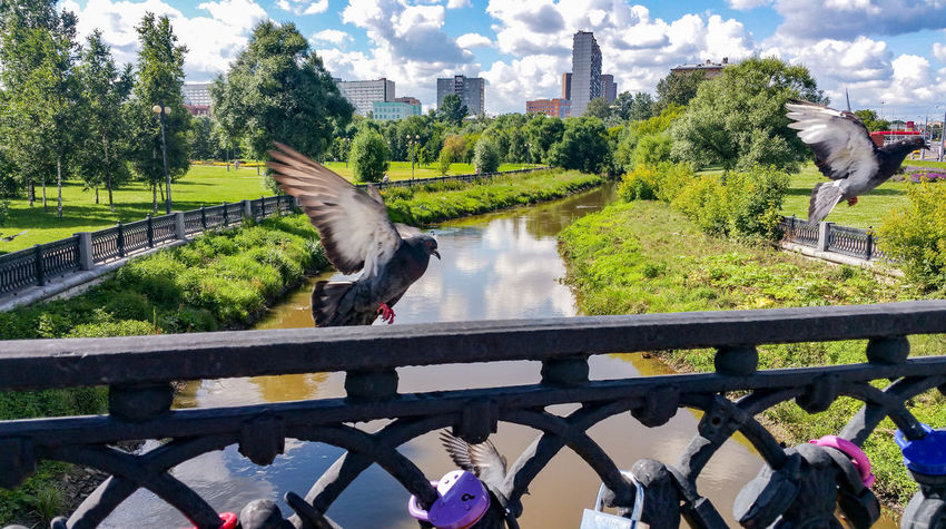 Animal Themes Animals In The Wild Cloud - Sky Bird Day Water Architecture No People Railing Animal Wildlife река Яуза Москва Moscow City Russia River Wedding Metal Cityscape Pigeons мост Traditional Tradition Locks