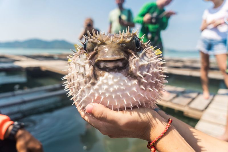 Exotic round sea fish in hands Sea Life Hobby Fishing Exotic Pets Exotic Fishing Fish Focus On Foreground Real People One Person Lifestyles Day Human Body Part Headshot Close-up Leisure Activity Holding Water Hand