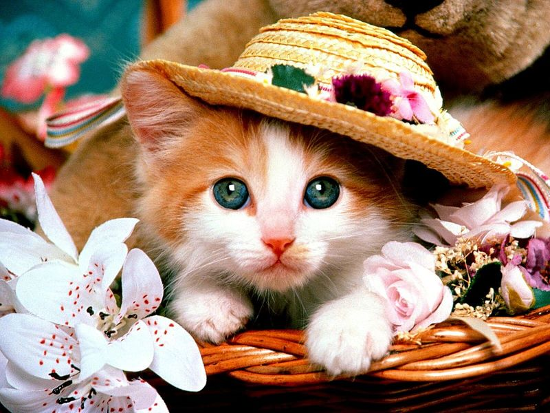 Pets Domestic Cat Animal Portrait Looking At Camera Domestic Animals Cute Animal Head  Feline Mammal Kitten No People Close-up Animal Themes Flower Outdoors Day