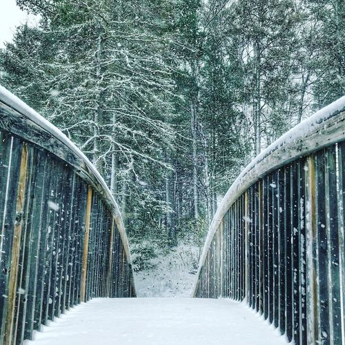 Snow covered footbridge in forest