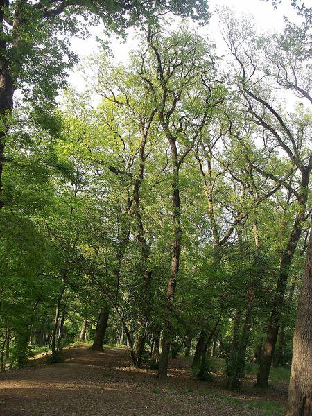 Tree Green Color No People Outdoors Beauty In Nature Koru Travel Photography Büyükçamlıca Istanbul Turkey Landscape