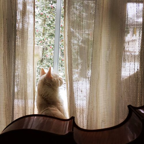 Things I Like Cat Mainecoon Cello Pets Snow Winter Musical Instrument Window Catoftheday Cats 🐱 Music Love Snow ❄ Wintertime Cold No People Tree Home Nothingfeelsbetterthanhome Photography Photo Taking Photos Domestic Cat Feline