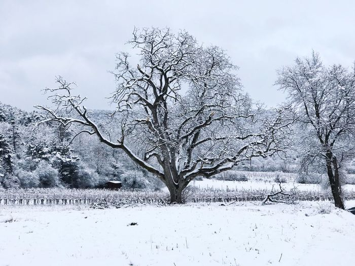 Snow Winter Cold Temperature Tranquil Scene Nature Landscape Tranquility Remote Scenics Branch Sky Outdoors Tree Beauty In Nature White Bare Tree No People Day Shades Of Winter