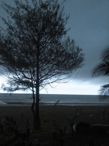 Tropical storm Bare Tree Beach Beauty In Nature Branch Calm Before The Storm Day Growth Landscape Nature No People Outdoors Scenics Sea Single Tree Sky Storm Tranquil Scene Tranquility Tree Tropical
