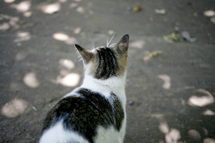 High angle view of cat looking at street in city