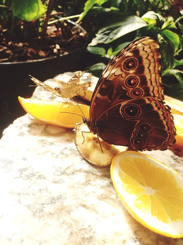 Photooftheday Photography Awesome Biology Nature Butterfly Orange