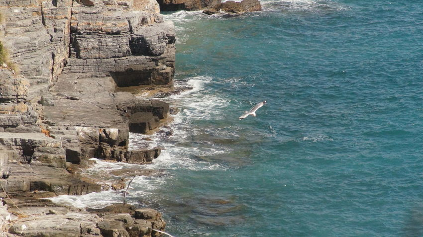Beauty In Nature Bird Cliff Motion Nature Rockwall Sea Seagull Seagulls And Sea Spezia Water