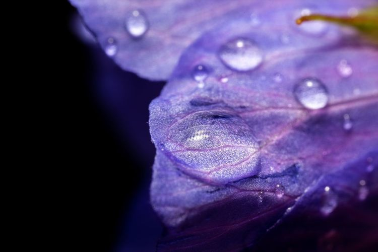 Rainfall... Nature Photography Reflection After The Rain RainDrop Drops Purity Macro_flower Macro Geranium Pratense Meadow Crane's-bill Wet Close-up Purple Water Beauty In Nature Drop Selective Focus Flower Flowering Plant Fragility Nature Petal Vulnerability  No People Freshness Extreme Close-up Plant Inflorescence Flower Head Softness