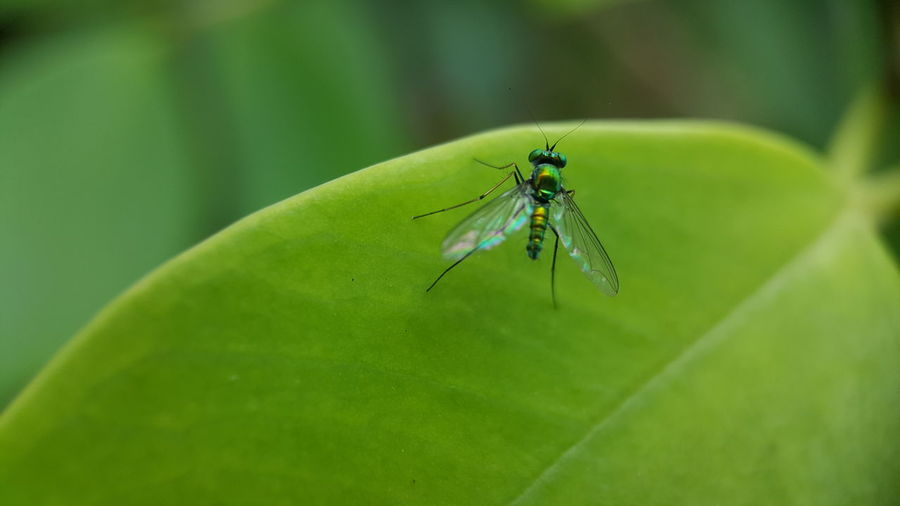 Macro shot of insect on green leaf