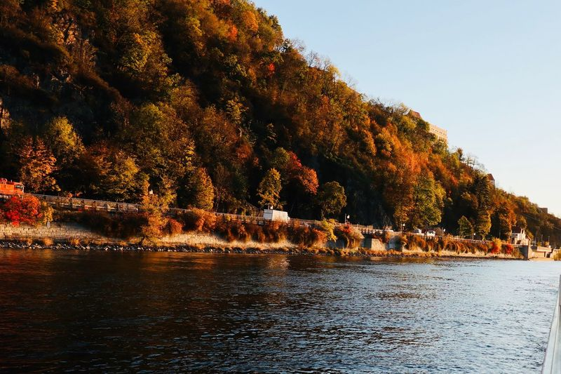 Autumn along the Danube Autumn colors Tree Sky Water Plant Nature Tranquility Clear Sky No People Beauty In Nature Scenics - Nature Day Waterfront Outdoors Tranquil Scene Growth Sunlight Idyllic