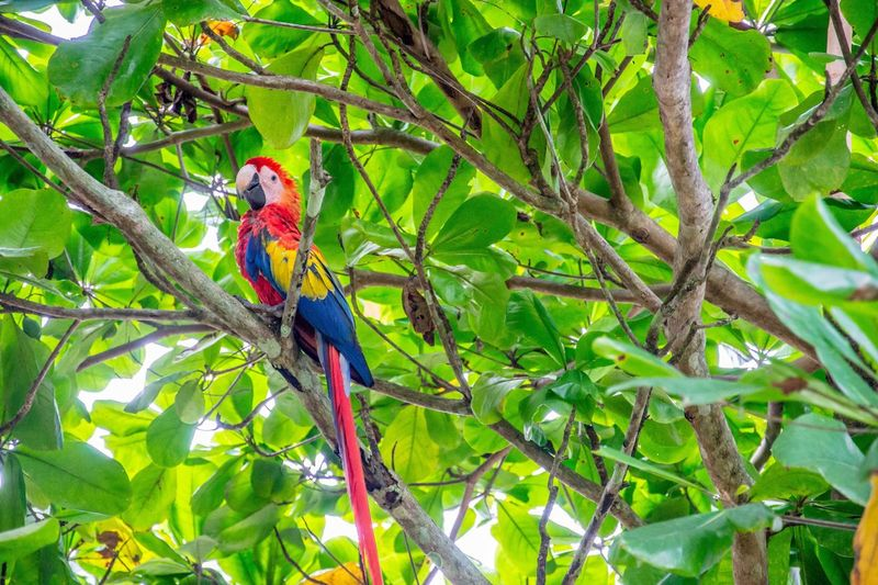 Bird Animal Wildlife Animals In The Wild Tree Parrot Perching Branch One Animal Beauty In Nature Red Animal Themes Leaf Nature Day Outdoors Macaw No People