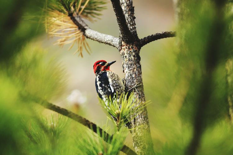 Low angle view of woodpecker perching on tree
