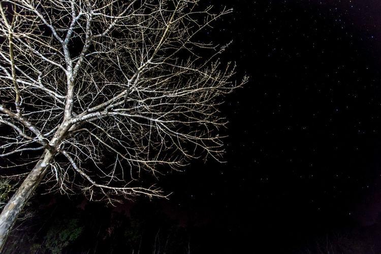 Alone Darkness And Light Khaoyai Khaoyao Night Thailand Tree White First Eyeem Photo