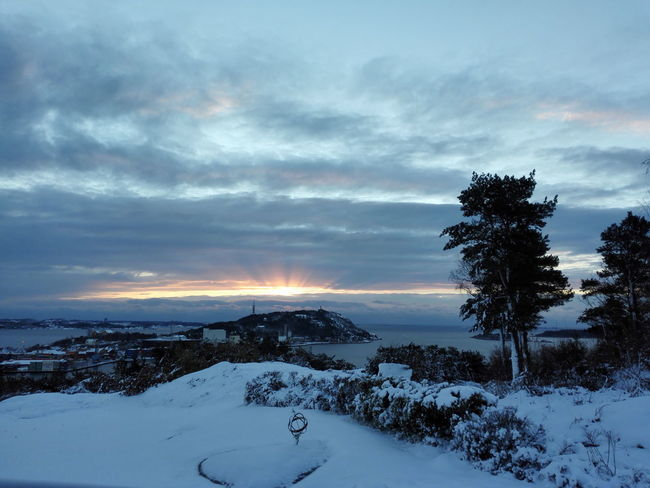 Tree Sea Cloud - Sky Dramatic Sky No People Sunrise Nofilter Noedit Winter Snow Nature On Your Doorstep Norway🇳🇴 My Garden @my Home Kristiansand