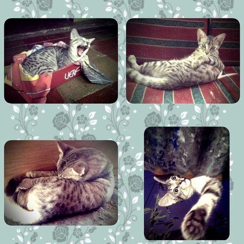 Y hoy como es el día de los gatos, les presento a Pacheco y sus mejores poses xD 😻😻😻😽😽 DíaInternacionalDeLosGatos Ilovecats ILovePacheco