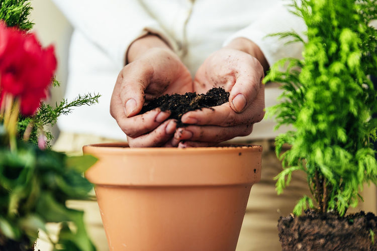 Human Hand One Person Plant Hand Growth Holding Human Body Part Nature Midsection Potted Plant Gardening Food And Drink Adult Freshness Real People Close-up Lifestyles Flower Pot Day Planting Outdoors Care Herb Home Interior Copy Space Flowerpot People Young Adult Lifestyle Seeds Bio Eco Earth