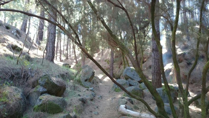 Mazo Trail Running La Palma