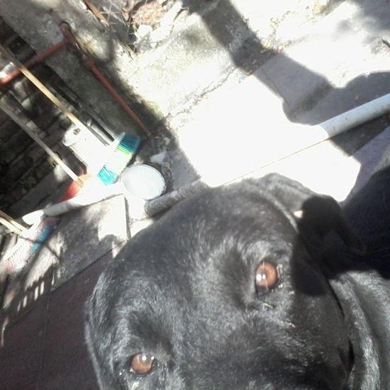 Pomelo ♡ Selfiedog Selfie Pic Dog primavera