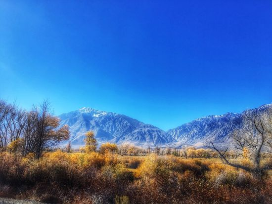Random Landscape Roadtrip Blue Nature Scenics Snow Beauty In Nature Clear Sky Cold Temperature Mountain Tranquil Scene Tranquility No People Tree Winter Outdoors Landscape Bare Tree Day Sky