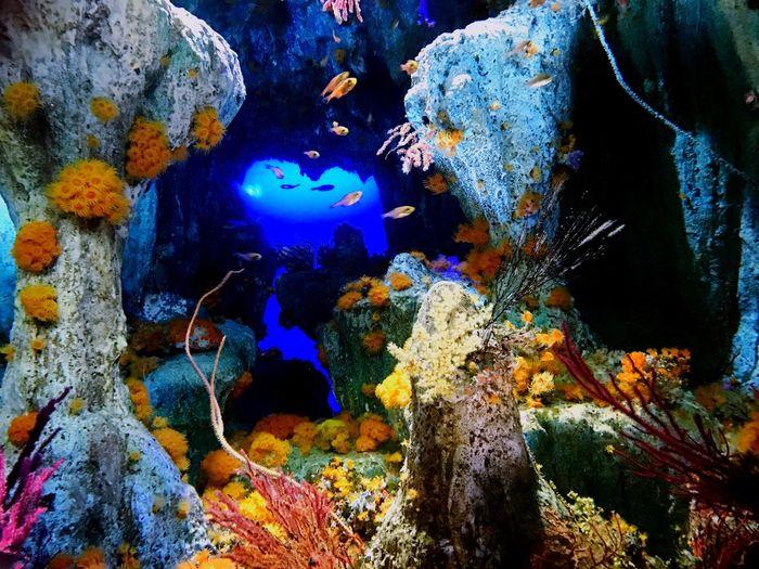 Tokyo,Japan Ikebukuro-sunshine Aquarium 池袋サンシャイン水族館 Fish