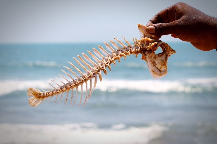 Close-up of hand holding fish skeleton